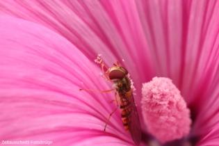 Zeitausschnitt-Fotografie, Sindy Bendigs Pawlack, Insekten